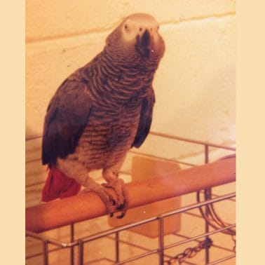 Fare Thee Well, the Parrot Niro